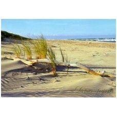 Turistiniai atvirukai 4001.8138 Jūra