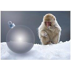 Kalėdinis atvirukas 2007.8885 Beždžionė