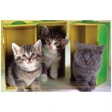 Magnetinis lipdukas 7006.6 Kačiukai tarp dėžučių