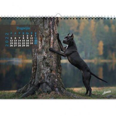 Pakabinamas kalendorius 9016.0013 2